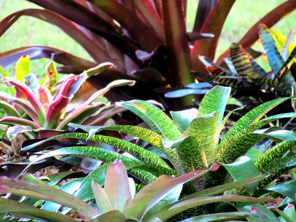 Bromeliad Misc