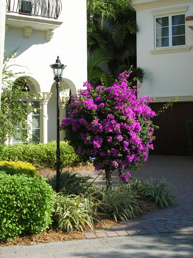 Standard Palm Beach Purple