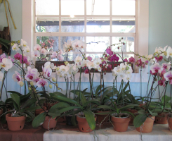 Orchids & Arrangements